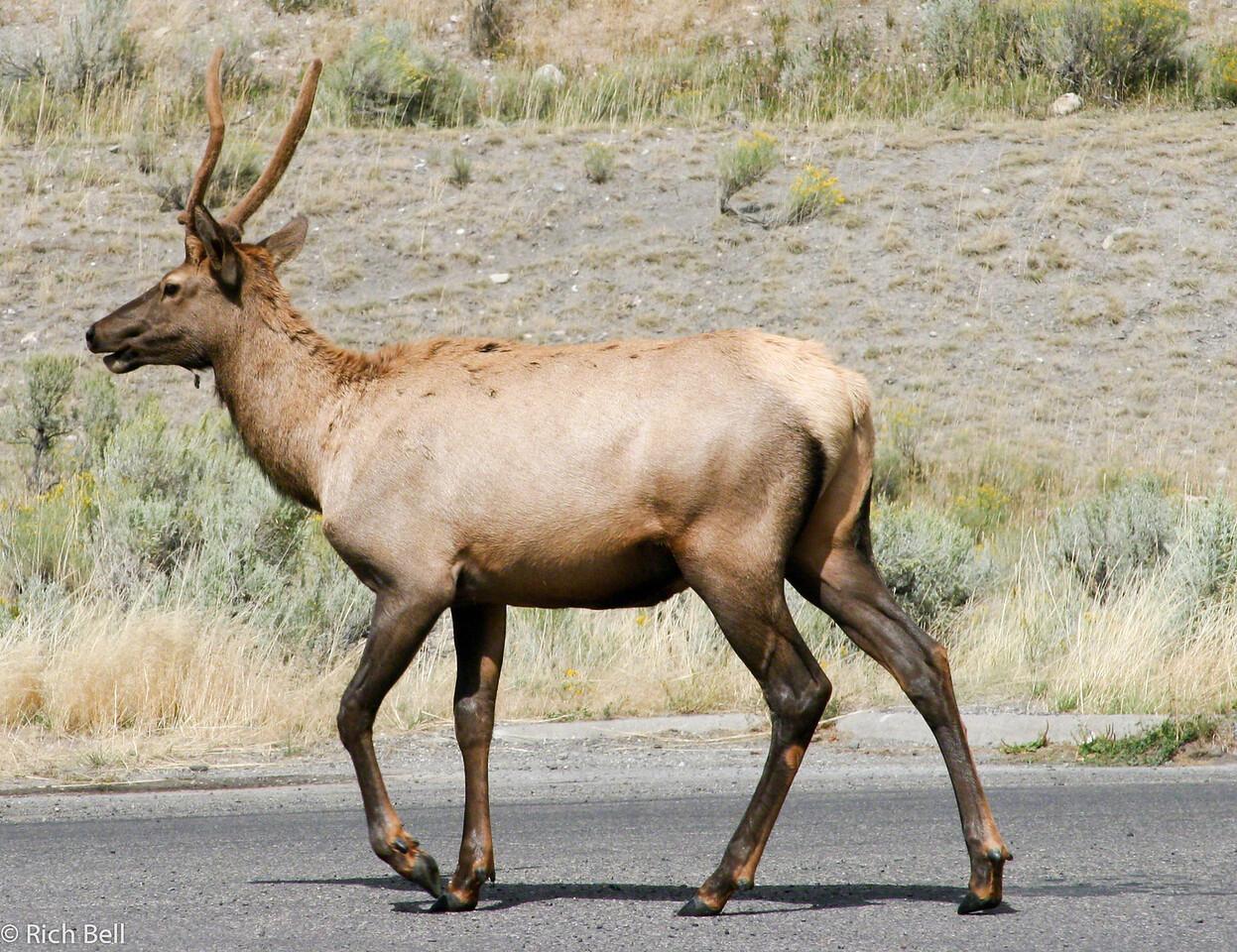 20050904 Yellowstone NP 0003