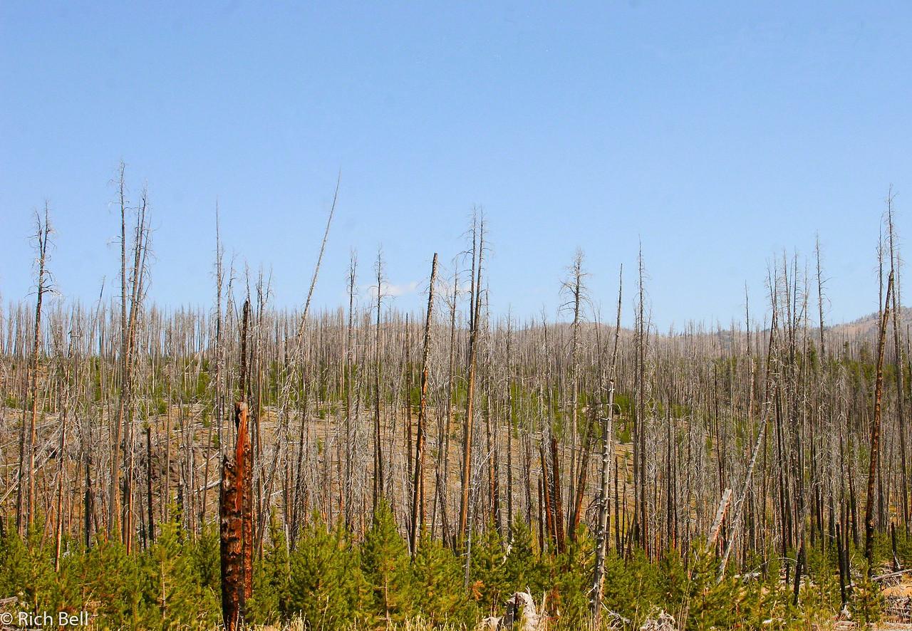 20100721 Yellowstone NP 0030