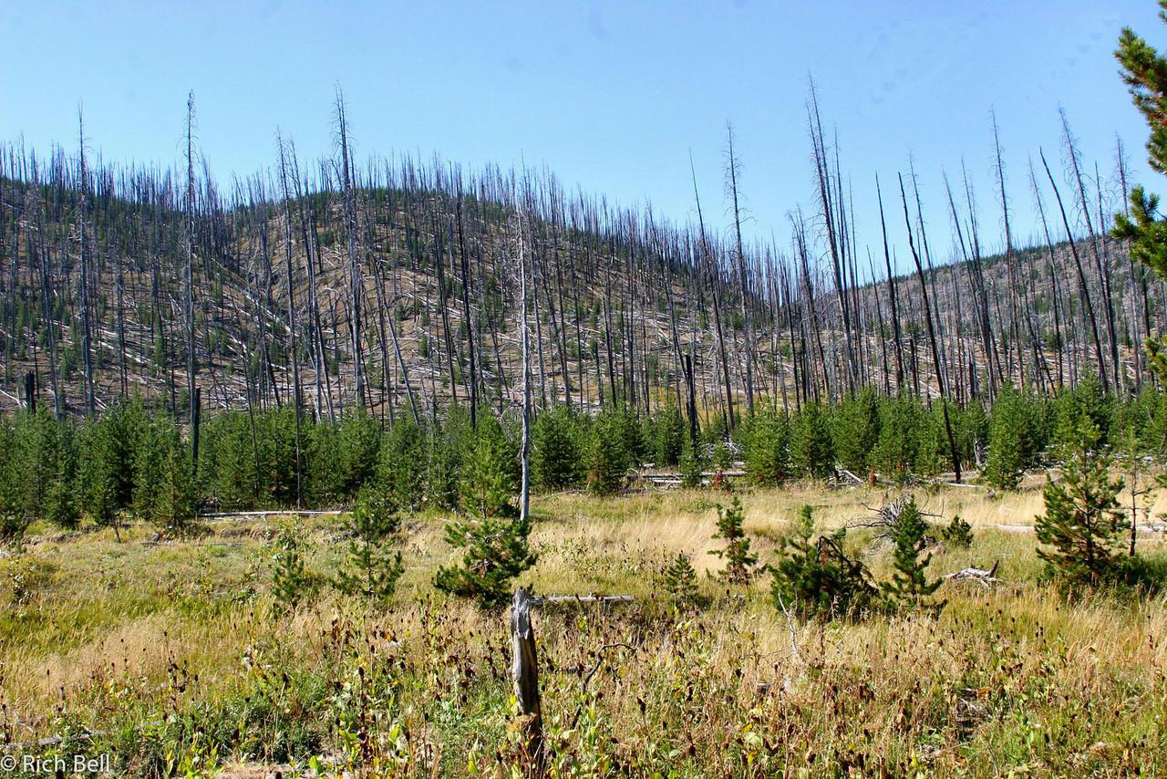 20100721 Yellowstone NP 0029
