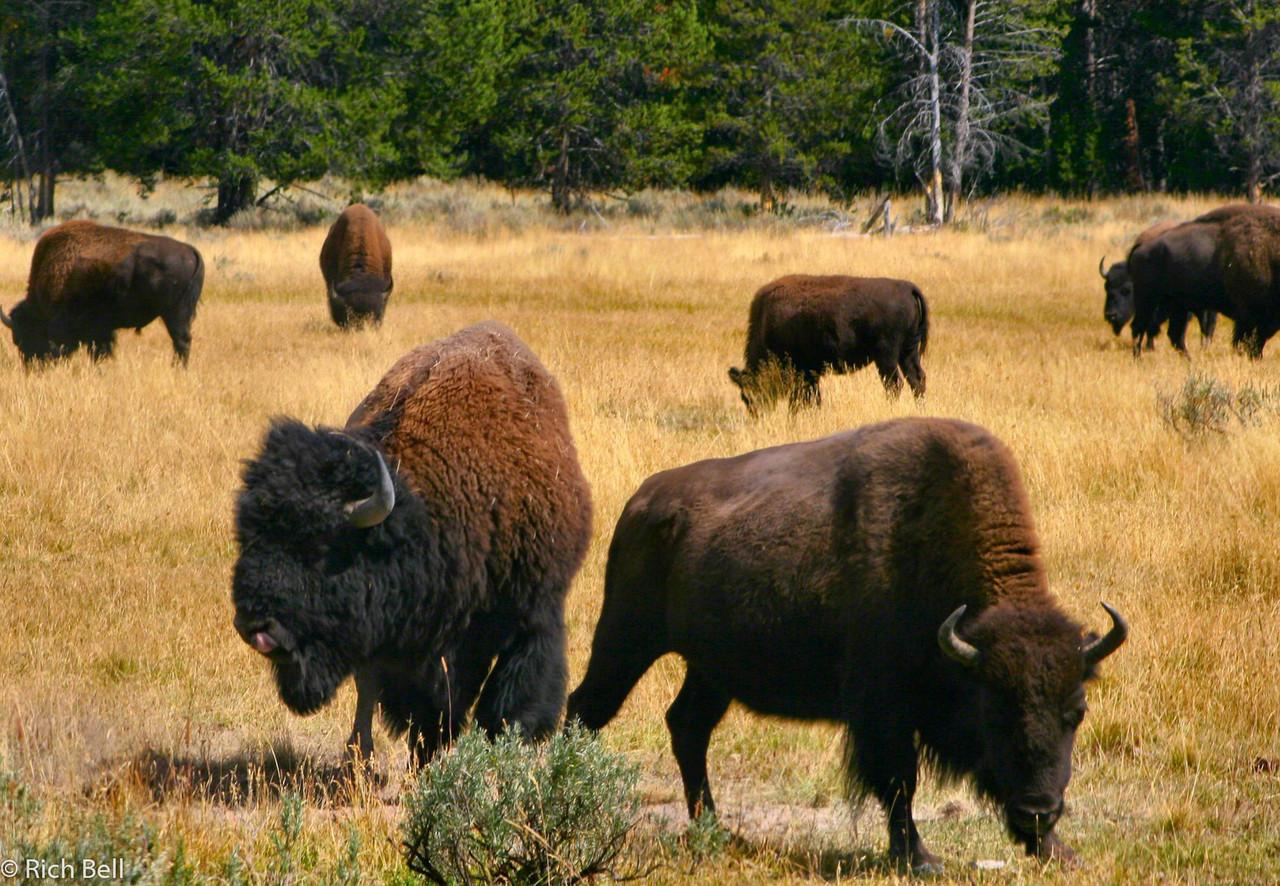 20100721 Yellowstone NP 0035