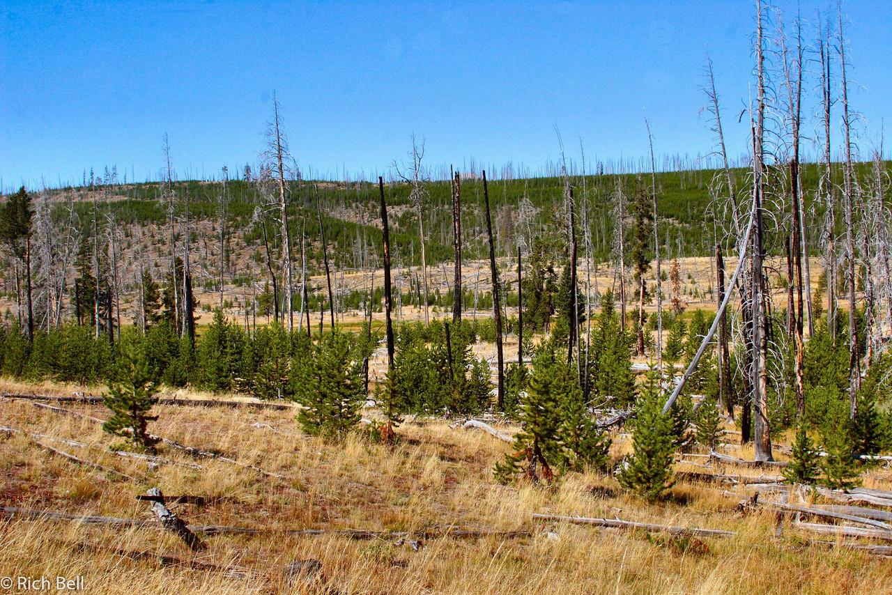 20100721 Yellowstone NP 0027