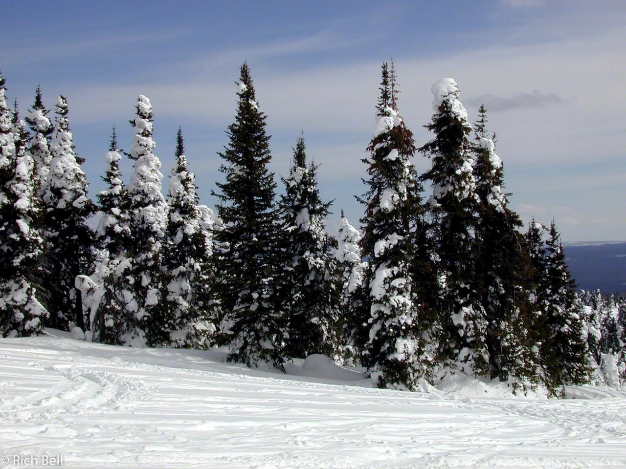 20100721Snow Covered Trees in Idaho near Yellowstone 60071