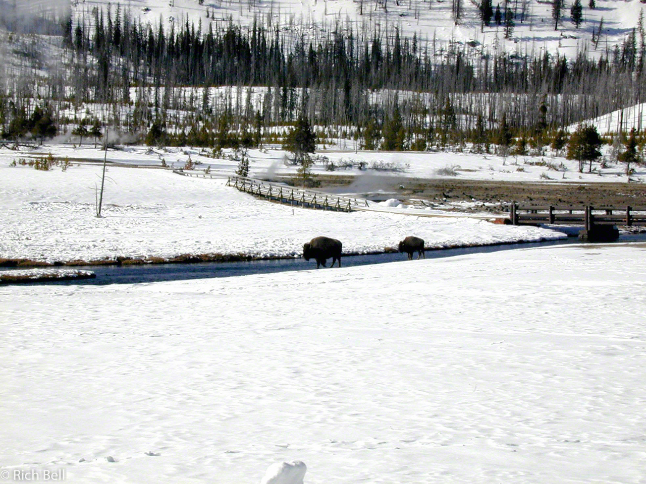 20100721Madison River in Yellowstone 30044