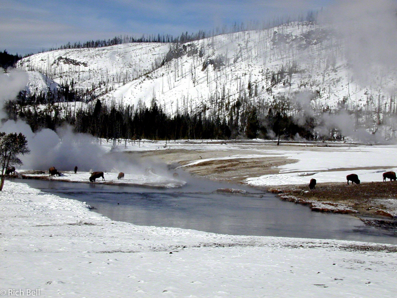 20100721Buffalo in hot springs meadow on trail to Old Faithful 140026