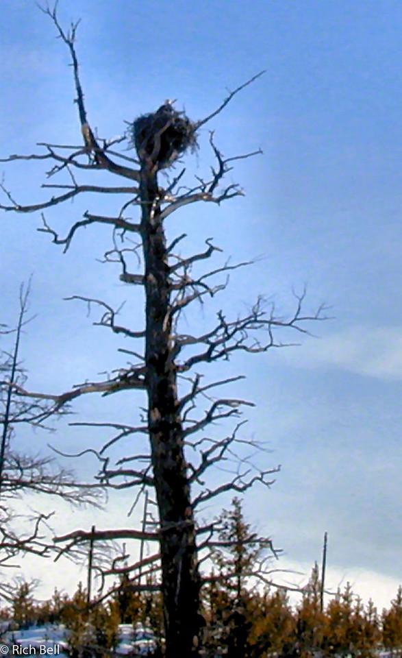 20100721Bald Eagle Nest0004