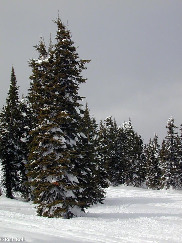 20100721Snow Covered Trees in Idaho near Yellowstone 40070