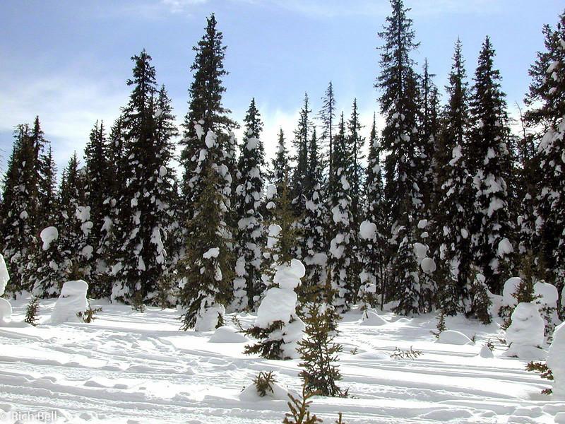 20100721Snow Covered Trees in Idaho near Yellowstone0073