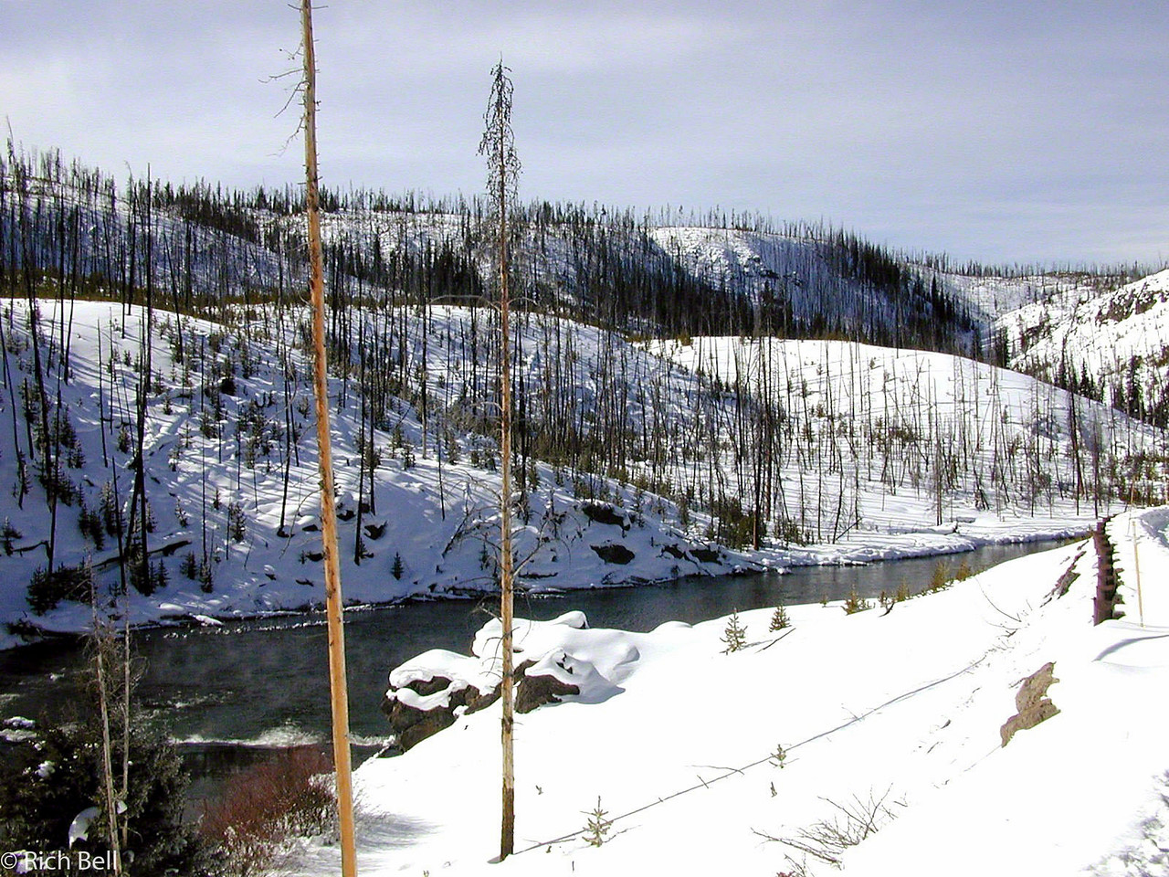20100721Evidence of 1988 Fire in Yellowstone0037