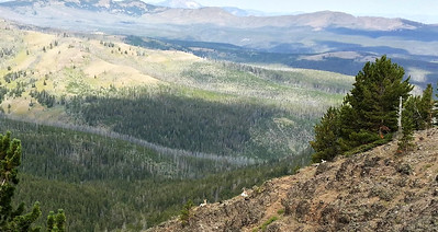 View from Mt Washburn