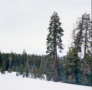 Badger Pass at Yosemite