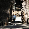 """Massive Redwood  Mom and little sis...  These trees are massive...   Some have been standing for well over 2000 years. <a href=""""http://blog.kevitivity.com"""">blog.kevitivity.com</a>"""