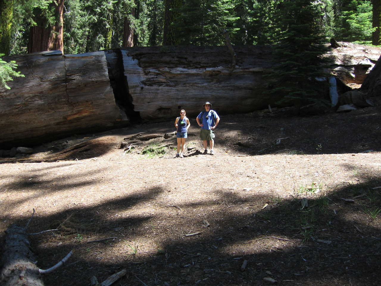 Massive tree, small humans <br /> My sister and I in front of a massive fallen redwood.  Photo by Mom.