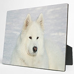<H3><b><u>Photo Panels</H3></b></u> <H1><H4><H6>Brilliant color reproduction on hardwood panels.  Sides and back are black with easel back.  Highly resistant to ultraviolet rays, scuffs, scratches, water and fading.  Your photo must be at least this big: 5 x 7:     575 x 805 pixels 8 x 10:   800 x 1000 pixels</H1></H4></H6>