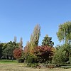 Panorama of trees in Glebe Park in Civic, Canberra in May 2016