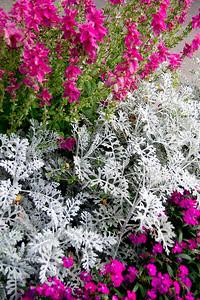 Juno Flowers