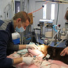 I'm filling Kuuyi the river otter's teeth as Eric the vet checks vitals.