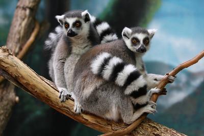 KC Zoo 08