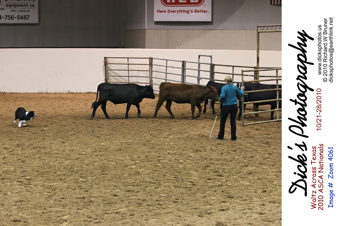 ASCA Nationals, cattle 107, sheep 106, pre-trial sheep 113