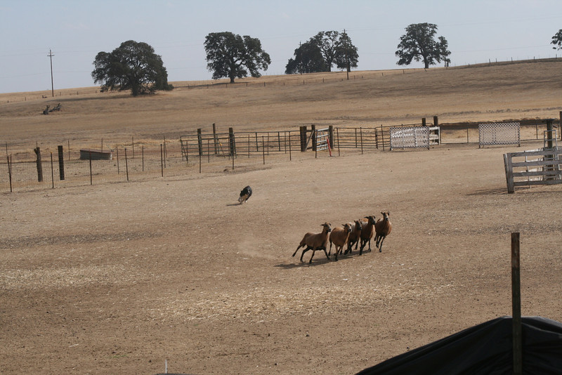 Bullet Fall Trial/Twin Oaks Ranch photo by Susan Severns