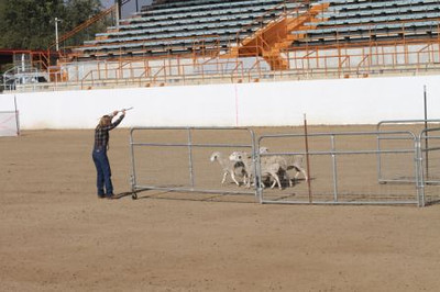 Sliding S photos 2012 ASCA Nationals-Bakersfield