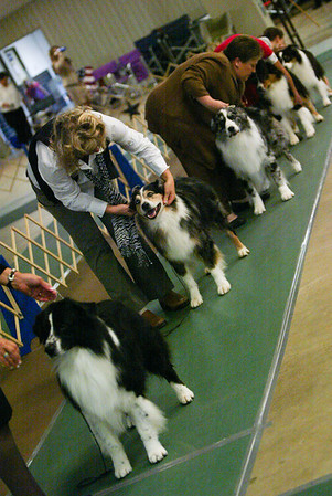 Zoom in the WTCH dog class