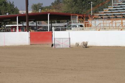 2012 ASCA Nationals-Bakersfield Sliding S photo