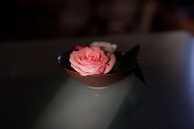 a rose a cat 5