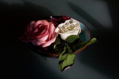 a rose a cat 8