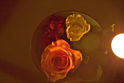 a rose a cat 2