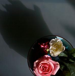 a rose a cat 4