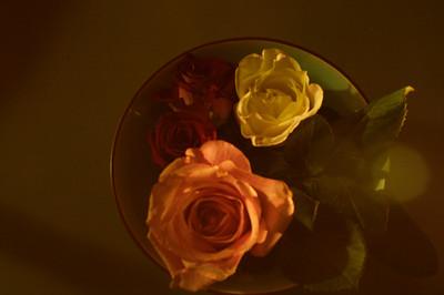 a rose a cat 3