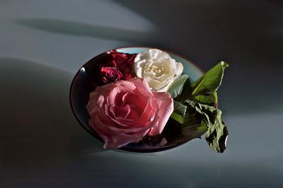 a rose a cat 9
