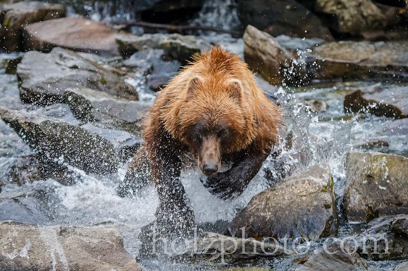 IMAGE: http://www.holzphotoclient.com/Other/alaska2012/i-FrMLXDP/0/L/AI3Q0711-L.jpg