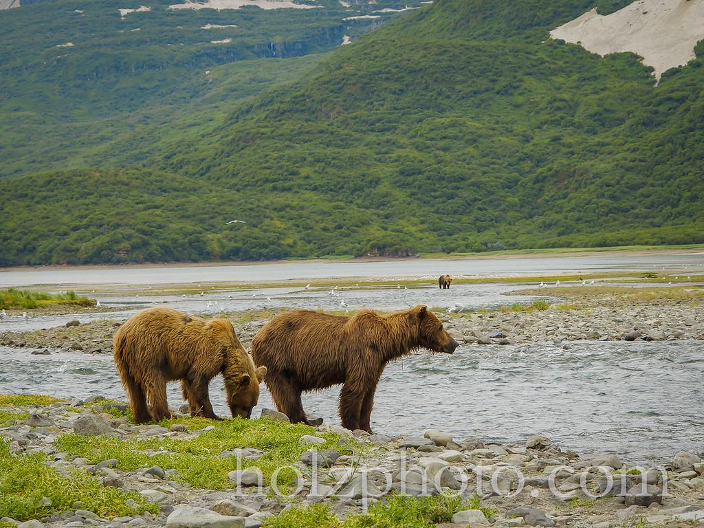 IMAGE: http://www.holzphotoclient.com/Other/alaska2012/i-JGHtr62/0/XL/IMG1943-XL.jpg