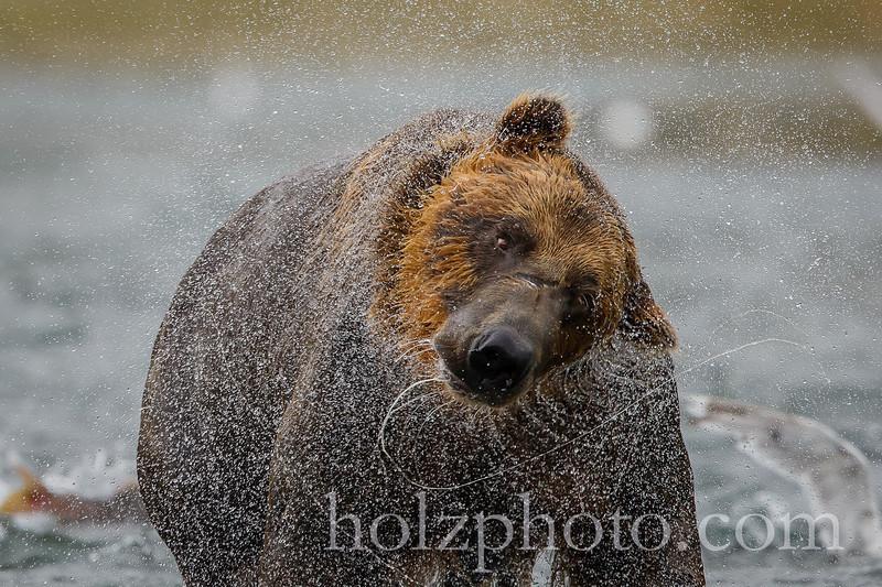 IMAGE: http://www.holzphotoclient.com/Other/alaska2012/i-MgDz8kd/0/L/AI3Q8822-L.jpg