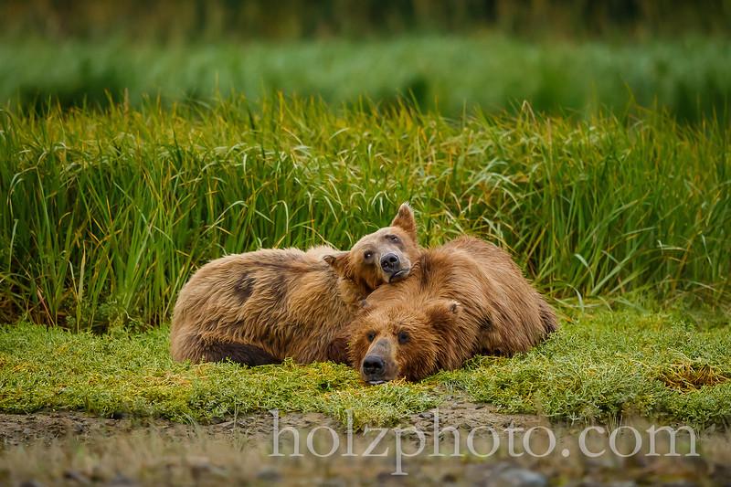 IMAGE: http://www.holzphotoclient.com/Other/alaska2012/i-fSQ9MXZ/0/L/AI3Q9796-L.jpg