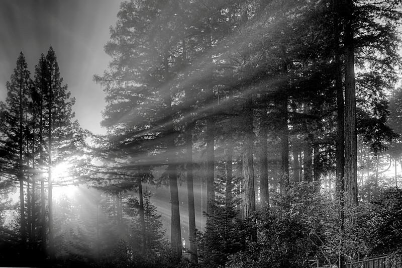 Foggy Felton Morning