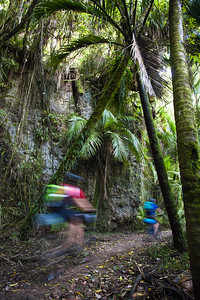 Through the nikaus enroute to Heaphy Hut.