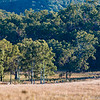 "Cattle muster ""Rosehill"" Queensland"