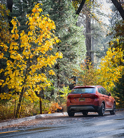 Yosemite Fall Colors BMW-2