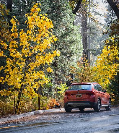 Yosemite Fall Colors BMW-2