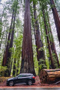 BMW Avenue of the Giants - Humboldt Redwoods-2