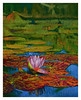water lilies 4 2005