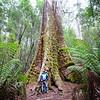 Tall Trees Tasmania