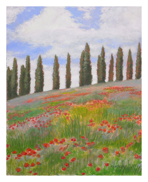 field of poppies 2005