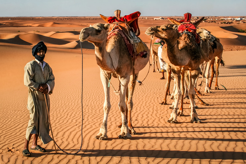 Camels, Chinguetti