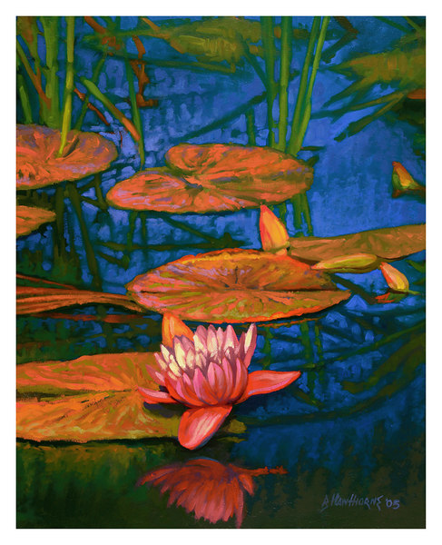 water lilies 3 2005
