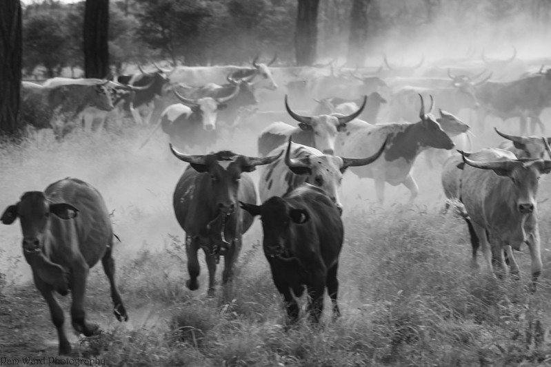 Mustering the Longhorns