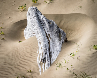 Driftwood and Drifted Sand
