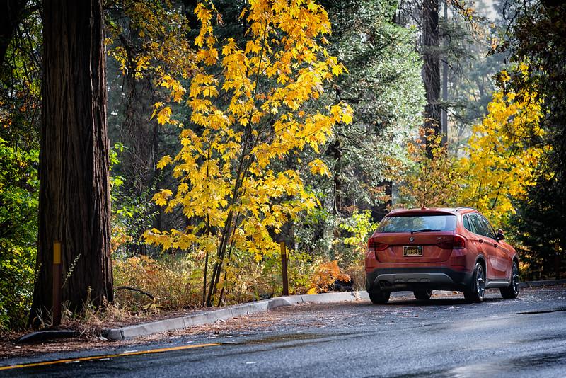 Yosemite Fall Colors BMW